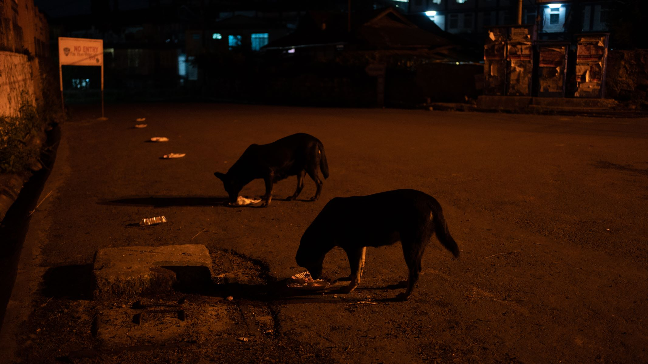 Stray dogs in Shillong being fed maintaining the social distancing