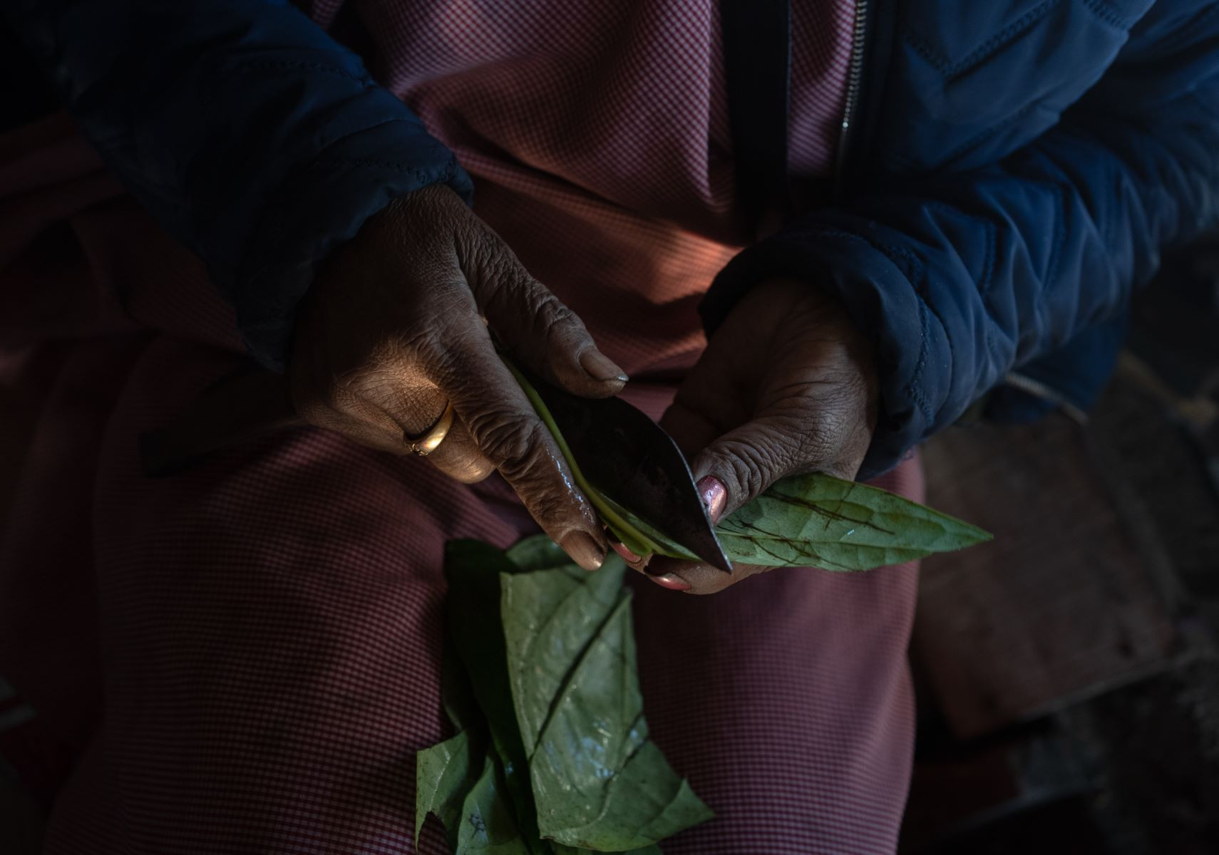 Photograph of betel-nut leaves to be served to one of the customers