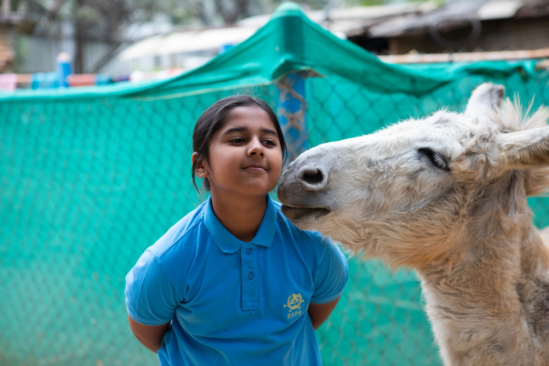 Mo the donkey tries to rub his head on Simhasthita at Samabhava